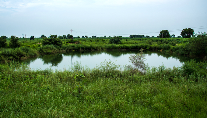 Shamshan Johad, Dhikoli, Baghpat, Uttar Pradesh