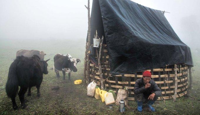 A Brokpa taking a tea break while grazing his animals at the high-altitude grasslands of West Kameng district in Arunachal Pradesh (Photo by Ritayan Mukherjee)