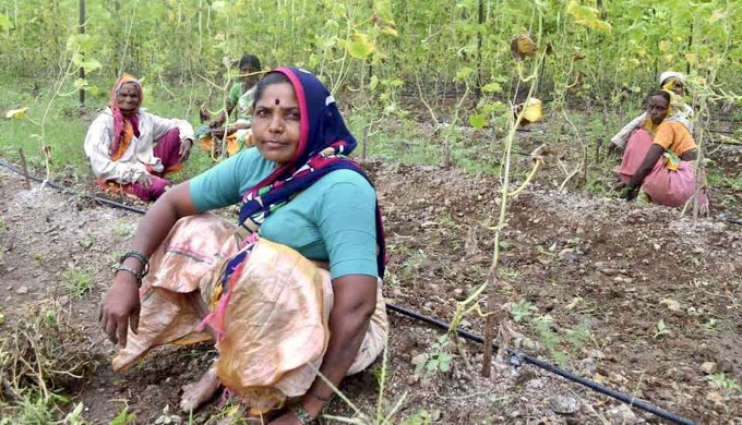 Climate-resilient agriculture ensures food security for smallholder and marginal farmers in Marathwada (Photo by Swayam Shikshan Prayog)
