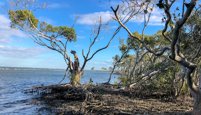 Mangroves can prevent billions of dollars in flooding damage