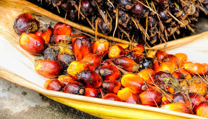The palm oil sector faces clody prospects due to the Covid-19 outbreak (Photo by Tristan Tan)