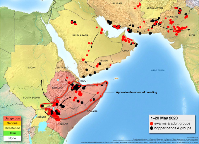 The spread of locust swarms from eastern Africa, across middle east towards India (Map by FAO)