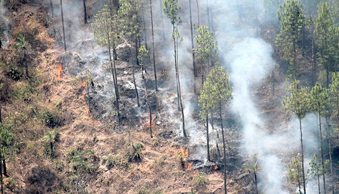 More heatwaves in summer leading to more forest fires