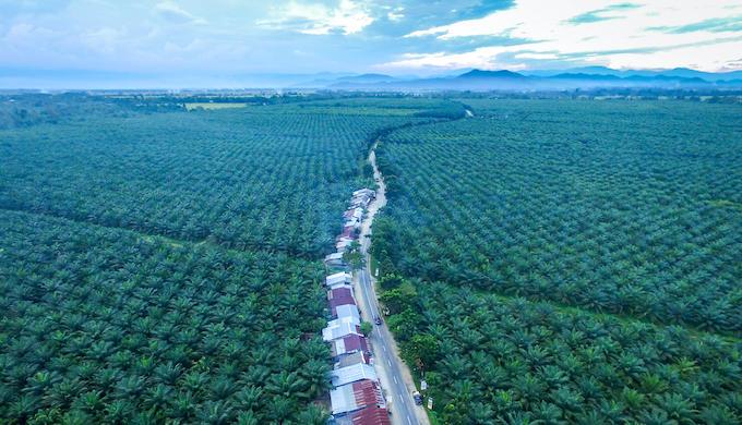 Palm oil plantation in Indonesia (Photo by Putu Artana/Alamy)