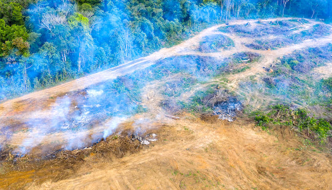 An aerial view of tropical rainforest deforestation to clear land for palm oil plantations (Photo by RDW Aerial Imaging/Alamy)