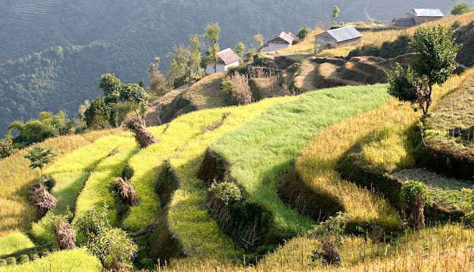 Terraced farmland in the middle Himalayas (Photo by Alamy)