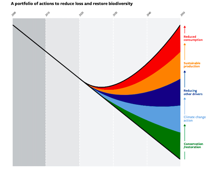 Trends in biodiversity have been declining and are projected to continue to do so under business as usual scenarios (trend line). Various areas of action such as enhanced conservation and restoration of ecosystems; climate change mitigation; action on pollution, invasive alien species and overexploitation; more sustainable production of goods and services, especially food; and reduced consumption and waste could reduce the rate of biodiversity decline (Source: Global Biodiversity Outlook 2020)