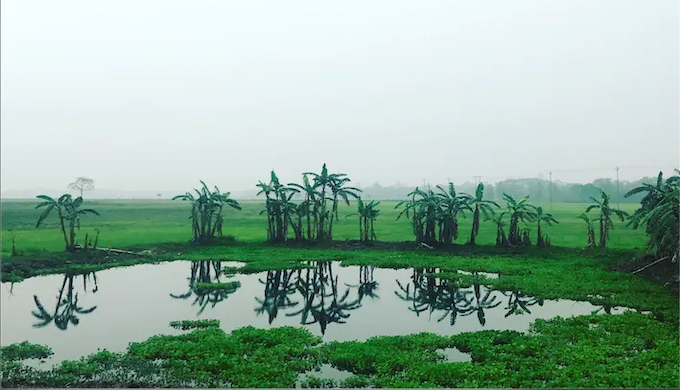 A rain-washed landscape from Nagaon, Assam, with ponds and wetlands in the foreground and background, where the frogs live. (Photo by Mirza Zulfiqur Rahman)