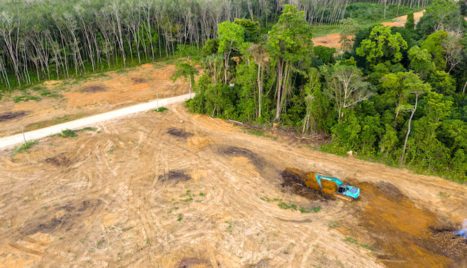 An excavator is used to destroy rainforest to make way for oil palms in Thailand (Photo by Alamy)