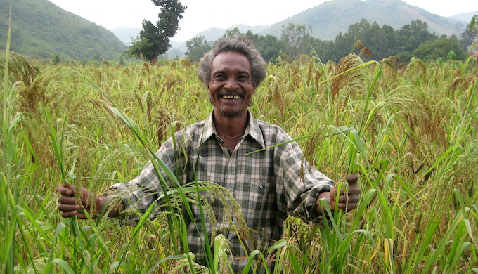 A tribal farmer cultivating millets in his farm (Photo by Abhijit Mohanty)